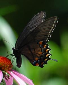 butterfly 2 fowt brochure
