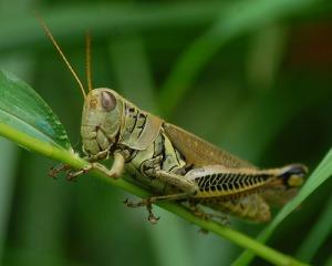 grasshopper fowt brochure